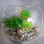 Декорированный аквариум фото