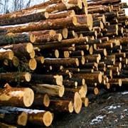 Закупка пиломатериалов,древесины фото