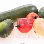 Овощехранилища холодильники в аренду фото