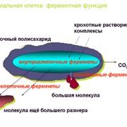Экология фото