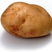 Картофель оптом фото
