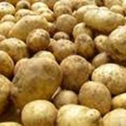 Торговля картофелем фото