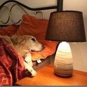 """Гостиница для собак (передержка) в Харькове """"Пес Барбос"""" фото"""
