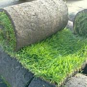 Вычесывание газона фото