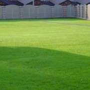 Садово-парковый газон фото