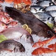 Морепродукты в Молдове фото