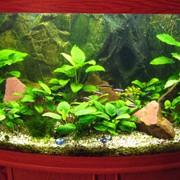 Дизайн и обслуживание аквариумов. фото