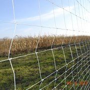 Сетка шарнирная(фермерская) фотография