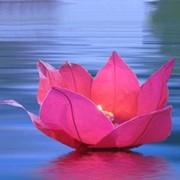 Фонарик водная Лилия фото