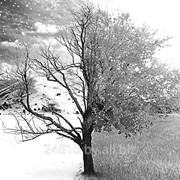 Обрезка плодовых деревьев (обрезка сада) фото