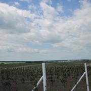 Виноградні стовпчики залізобетонні в Вінниці фото
