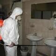 Дезинсекция жилых помещений Места общего пользования (кухня, коридор, ванная, туалет, балкон) фото