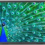 Интерактивный дисплей ActivPanel Touch2 55 фото
