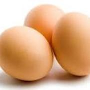 Куплю оптом яйца фото