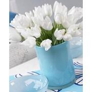Луковицы тюльпанов из Голландии на выгонку. фото