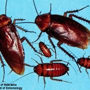 Очистка от инфекций, насекомых и грызунов, г. Никополь Днепропетровская обл. фото