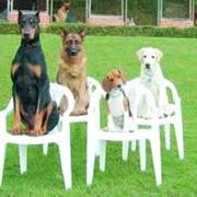 Дрессировка собак. фото