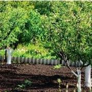 Посадка плодовых деревьев фото
