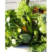 Семена зеленых овощей фото