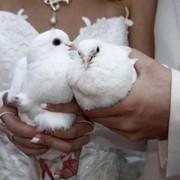 Организация свадьбы, услуги тамады фото
