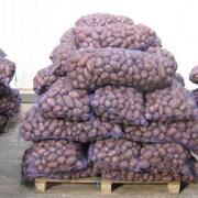 Картофель оптом от производителя фото