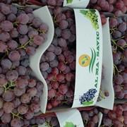 Виноград Red glob фото