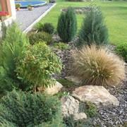 Декоративные травы фото