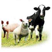 Кормовые добавки, добавки пищевые для животных фото