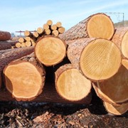 Заготовки, болванки деревянные промышленные фото