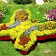 Сенсорный сад — новое течение в дизайне фото