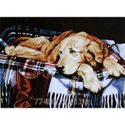 Картина Скучающий щенок фото