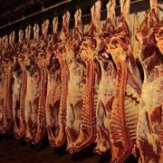 Свинина в полутушах фото