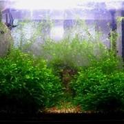 Изготовление,оформление и обслуживание аквариумов фото
