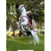 Фотосъемка лошадей фото