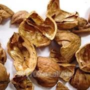 Скарлупа грецкого ореха фото