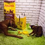 Корма для кошек и собак торговой марки Josera фото