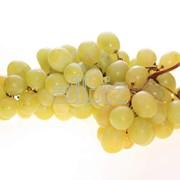 Виноград украинский сорта Мускат фото