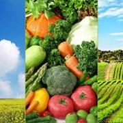 Припосевное удобрение и подкормка пшеницы,ячменя, сахарной свеклы,Подсолнечника,Картофеля,При выращивании крупяных культур,Овощей,бахчевых фото