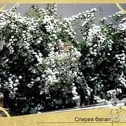 Посадка растений в Севастополе фото