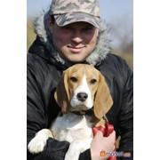 Дрессировка собак, защита и аджилити в Харькове фото