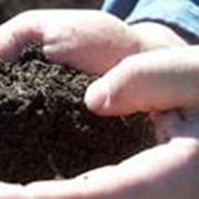 Подкормка растений минеральными и органическими удобрениями фото