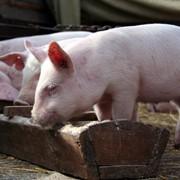 Пробиотические ветеринарные препараты фото