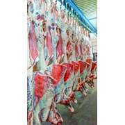 Говядина туши с доставкой в Узбекистан фото