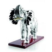 Слон с бивнями фото