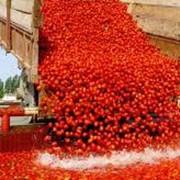 Упаковка продуктов питания в порционную упаковку, производство томатной пасты.ПродАгроСервис ПТП c ИИ. Херсон Украина фото