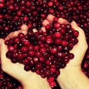 Клюква свежая ягода опт фото