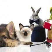Товары для животных, зоотовары в Петропавловске фото
