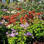 Устройство цветников и клумб №46 фото