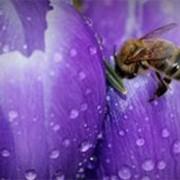 Мед цветочный - крем фото