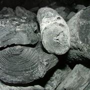 Уголь древесный из твердых пород древесины фото